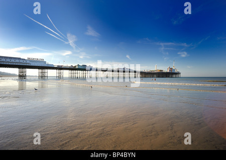 Three people go swimming at low tide by Brighton Pier - Stock Photo