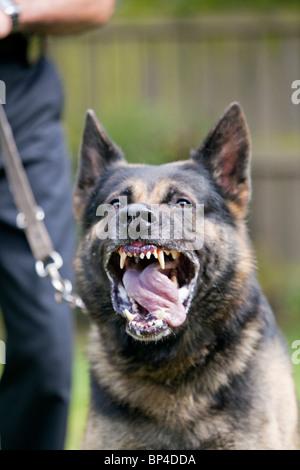 Service Dog Handler Rights