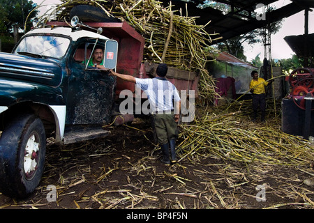 An old truck fully loaded by harvested sugarcane stands in front of the panela production farm close to San Agustin, - Stock Photo