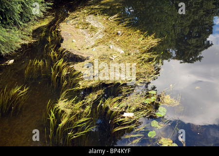 Litter river pollution in weeds River Wensum, Norwich, England - Stock Photo