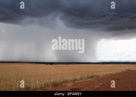 Rain streaking down from dramatic dark looming cumulus cloud formations onto farmland in the distance - Stock Photo