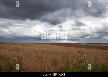 Ominous cumulus thunder cloud formations looming above a vast field of crops in rural southwest Colorado - Stock Photo