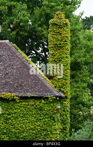 House and chimney covered in Ivy at RHS Wisley gardens, Surrey, England - Stock Photo