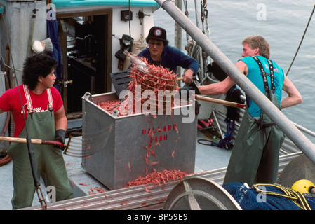 Commercial seafood shellfish shrimp fishing with modified for Fisher fish chicken indianapolis in