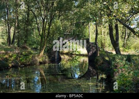 The Ivy Bridge at the Chinese Ponds Castle Toward Estate Corlarach Forest Ardyne Argyll - Stock Photo