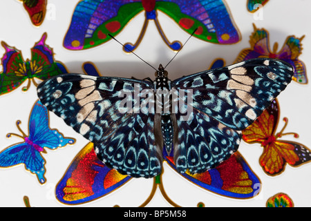 Cracker butterfly (Hamadryas Amphinome) - Stock Photo