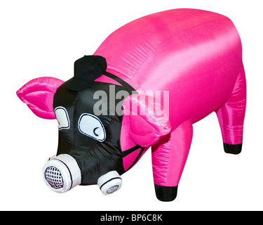 Pig in front of white background, isolated. - Stock Photo
