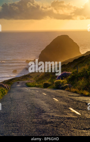 Deer crossing the Mattole Road, at westernmost point of paved road in the contiguous US, Cape Mendocino, Lost Coast, - Stock Photo