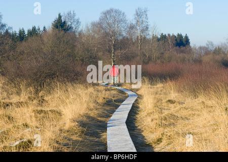 Hautes Fagnes Reserve in wintertime, Eupen, Province Liège, Belgium - Stock Photo