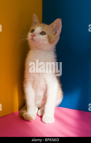 A kitten looking up - Stock Photo