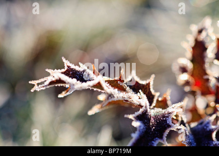 Oregon, United States Of America; Frost On Autumn Leaves - Stock Photo