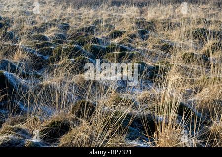 Hautes Fagnes Reserve in wintertime, Frozen moor, Eupen, Province Liège, Belgium - Stock Photo