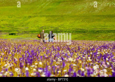 Elderly couple searching for Mushrooms amid acres of wildflowers in the Piano Grande near Castelluccio, Umbria Italy - Stock Photo