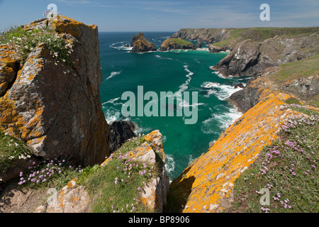 Lizard Coast framed by Lichen covered rocks. The cliffs, the beaches and the headlands along the Coast Path - Stock Photo
