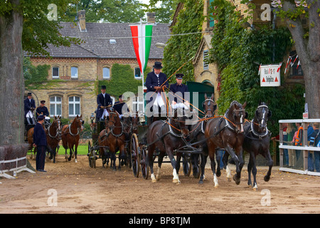 Outdoor photo, Stallion Parade, State Stud, Warendorf, Muensterland, North Rhine-Westphalia, Germany, Europe - Stock Photo