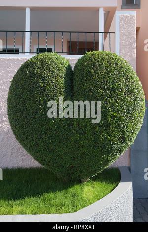 Heart shaped bush, Estreito de Camara de Lobos, Madeira, Portugal - Stock Photo