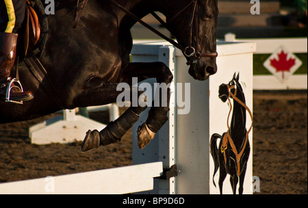 RCMP rider and horse jumping - Stock Photo