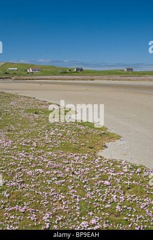 Machair in Summer, North Uist, Outer Hebrides, Western Isles, Scotland.  SCO 6361 - Stock Photo