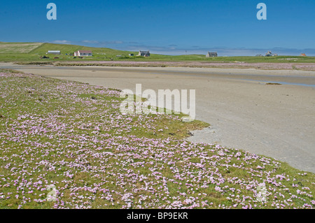 Machair in Summer, North Uist, Outer Hebrides, Western Isles, Scotland.  SCO 6362 - Stock Photo