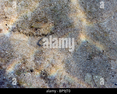 A small fish, camouflaged like sand, on the bottom of the Mediterranean. - Stock Photo