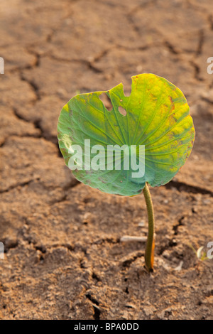 Dry cracked earth drought with single green plant stock for Soil and green