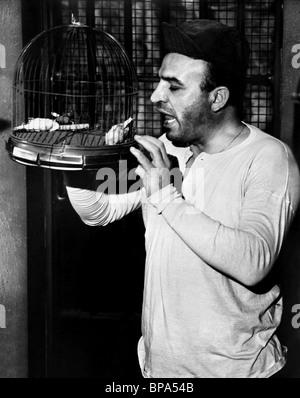 TELLY SAVALAS BIRDMAN OF ALCATRAZ (1962) - Stock Photo
