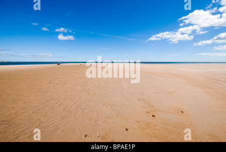Man walking his dogs on a deserted Northumberland beach - Stock Photo