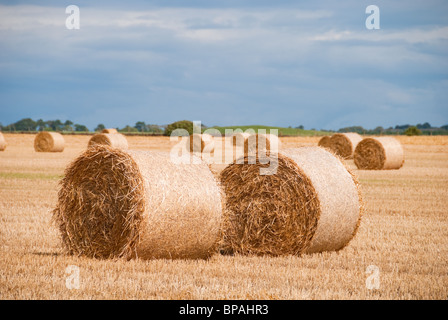 After the harvest, a field is left full of hay bales waiting for collection. - Stock Photo
