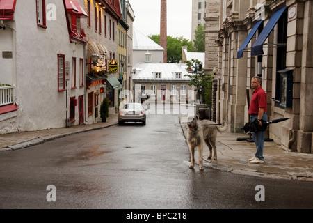 Man with Irish wolfhound. Quebec City, Canada. - Stock Photo