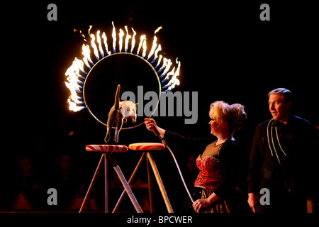 Cat jumping through a ring of fire at circus Brazil Jack, Sweden. - Stock Photo