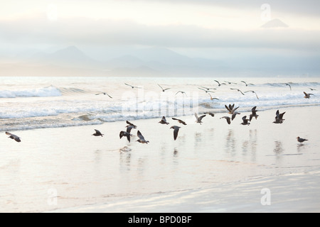 Flock of seagulls on the beach - Stock Photo