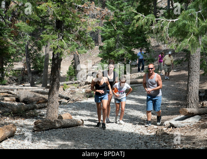 A family walking in the woods, Mt Charleston near Las Vegas, Nevada, USA - Stock Photo