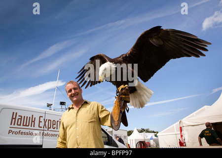 UK, England, Merseyside, Southport Flower Show, Chris O'Donnell, of Hawk Experience, Bald Eagle Haliaeetus leucocephalus - Stock Photo