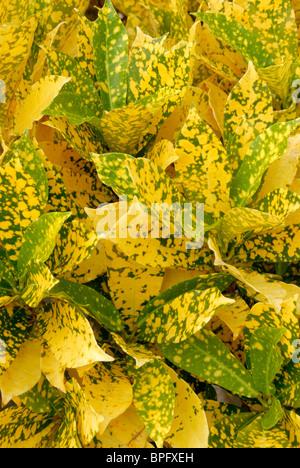 Yellow and Green Foliage - Stock Photo