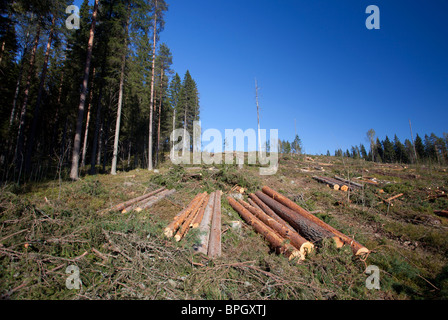 Pine and spruce logs at clear cutting area , Finland - Stock Photo