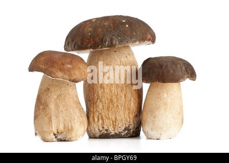 three Boletus Edulis mushroom isolated on white background - Stock Photo
