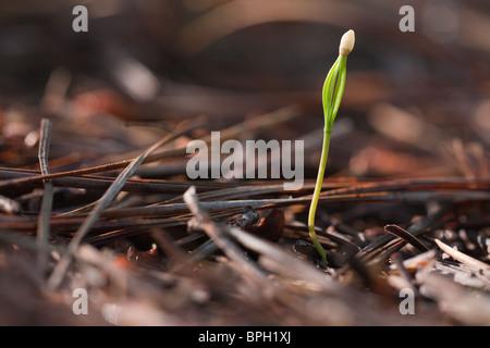 Growing Sapling close up - Stock Photo