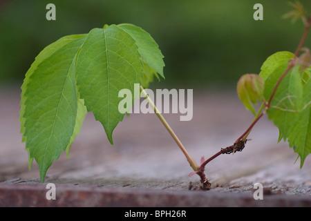 Growing Sapling close up