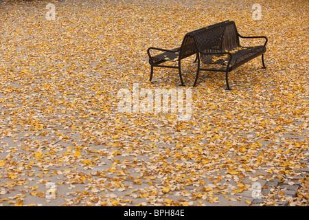 Fallen leaves on benches, Boston, Suffolk County, Massachusetts, USA