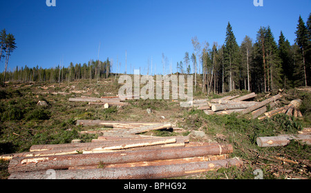 Logging the forest has produced pine and spruce logs at clear cutting area , Finland - Stock Photo