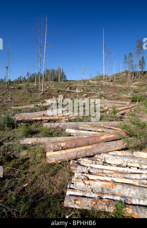 Pine spruce and birch logs at Finnish clearcutting area , Finland - Stock Photo