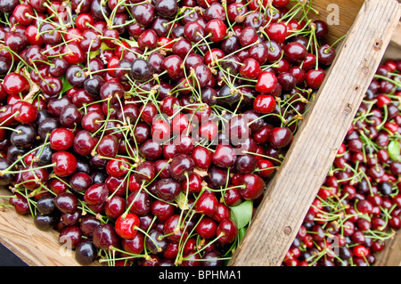 Fresh, freshly picked organic cherries in wooden boxes on sale at a morning market in Healdsberg, Sonoma - Stock Photo