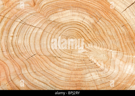 Close-up of a cross section of a tree stump showing aging circles - Stock Photo