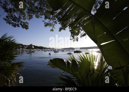 Morning view of Rose Bay Marina, Sydney, New South Wales, Australia - Stock Photo