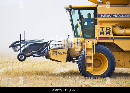 Young boy driving combine harvester on wheat field during harvest, Near Winkler, Manitoba, Canada. - Stock Photo