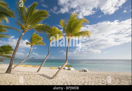 Beach scene, palm trees at La Pirogue Hotel, Flic en Flac, Mauritius