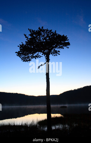 Summer night beside the lake Andersnattjern in Eggedal, Norway. - Stock Photo