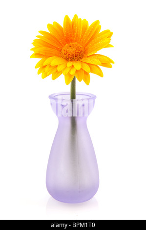 White Daisy Flowers In Glass Vase Isolated On Blue Background In