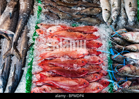 WASHINGTON DC, USA - Fresh red snapper for sale at the Maine Avenue Fish Market in Washington DC - Stock Photo