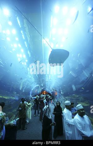 People inside Dubai Aquarium and Underwater Zoo inside Dubai Shopping Mall, Dubai, UAE, United Arab Emirates, Middle - Stock Photo